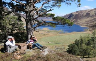 Glenesk Wildlife Tours