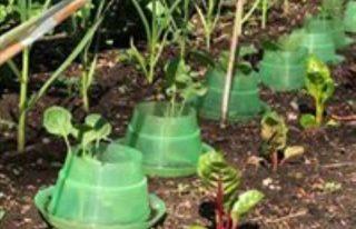 HOPE Organic Garden