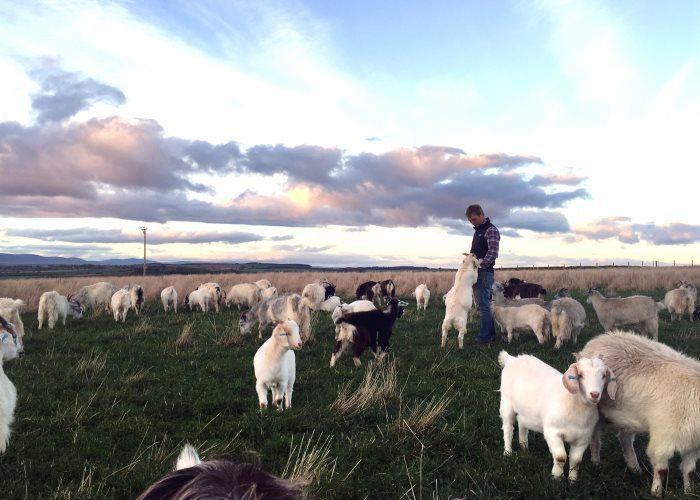 Myreside Farms