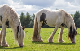 Redwings Mountains horse sanctuary, Forfar