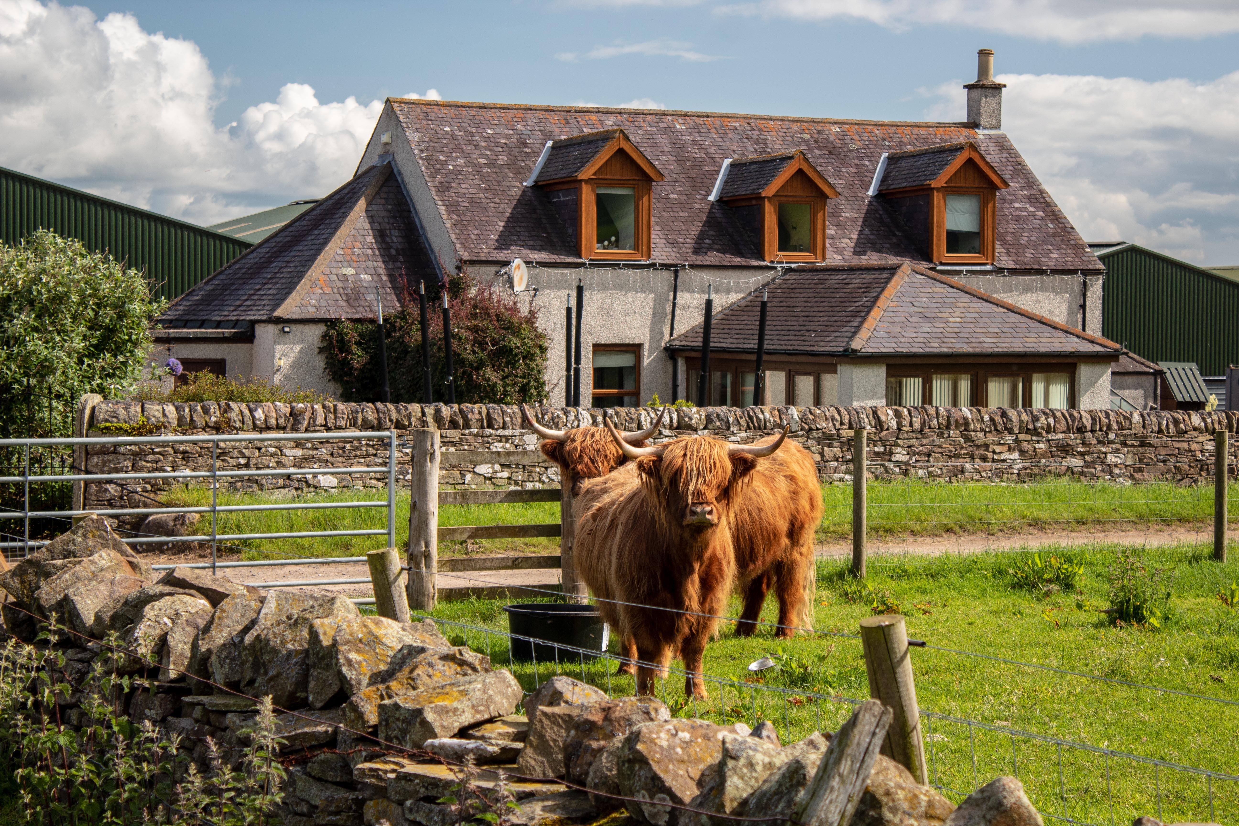 Newton Farm Holiday B&B house with highland cows