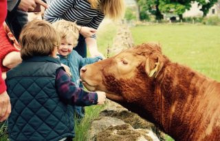 Newton Farm Holidays - Farm Tour