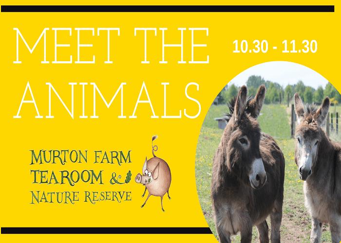 Murton Donkeys