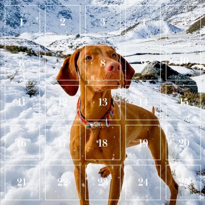 Visit Angus Advent Calendar Cover