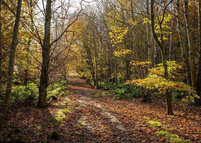 Friockheim Woods