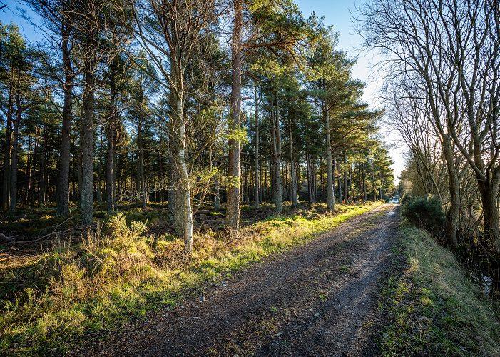 Montreathmont Forest