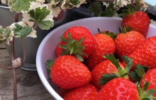 Balhungie Berry Farm
