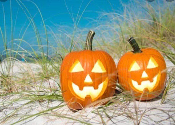 Lunan Bay Pumpkins